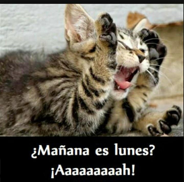 Imagenes chidas para Facebook Mañana es viernes  - imagenes chistosas de mañana es viernes