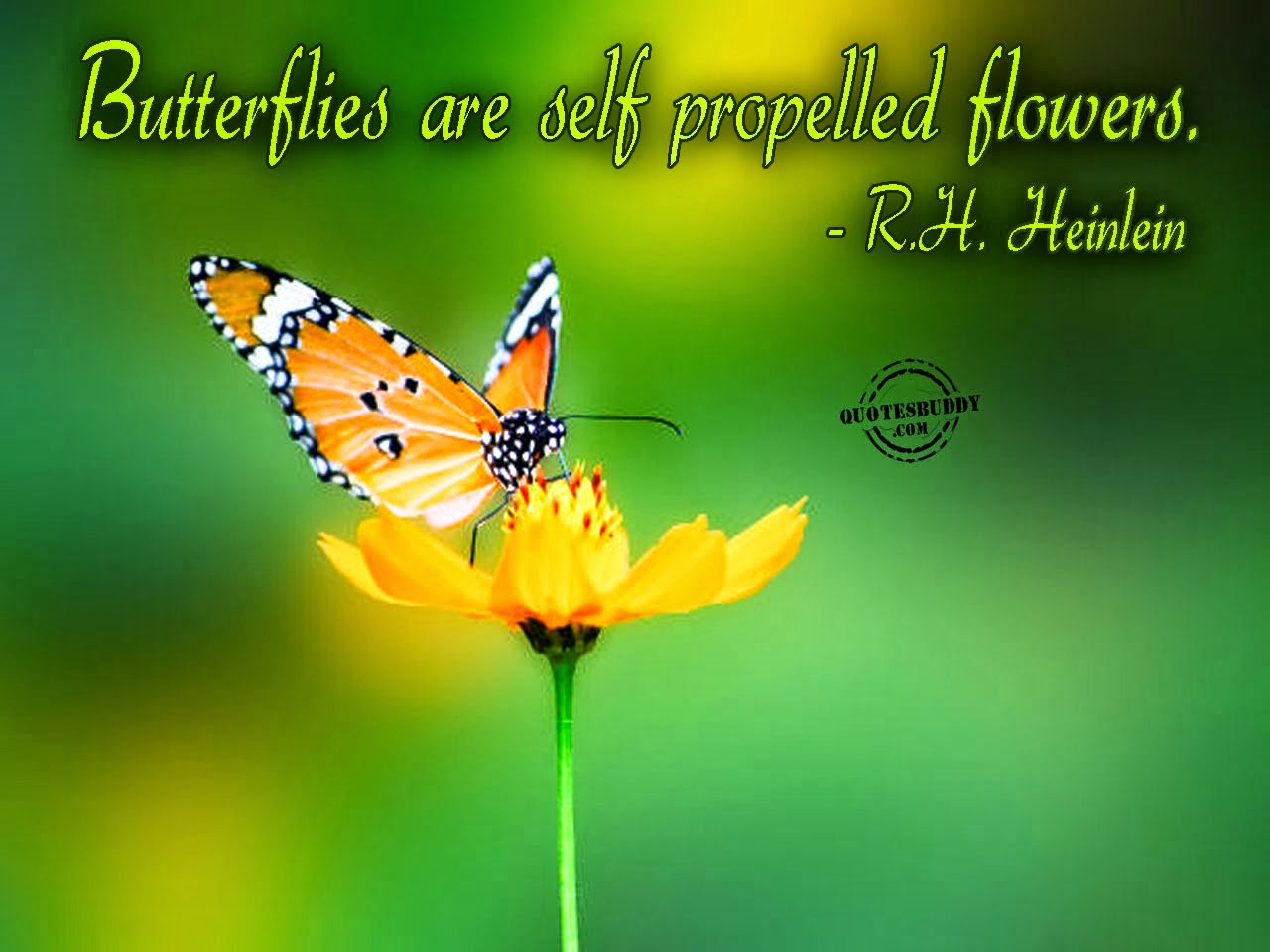 Butterfly and Flowers Quotes and natural pictures