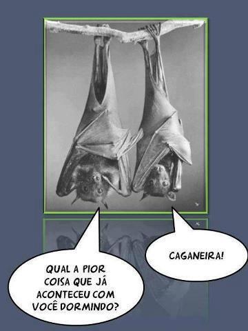 Morcegos: Qual a pior coisa que já aconteceu com você dormindo? Caganeira!