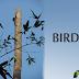 Birds at Chintamani Kar Bird Sanctuary