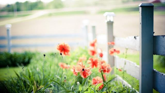 Tải hình nền hoa mùa xuân