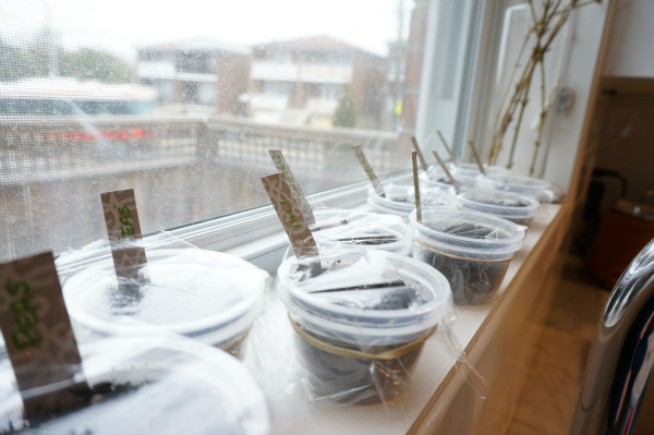 seeds growing on window sill