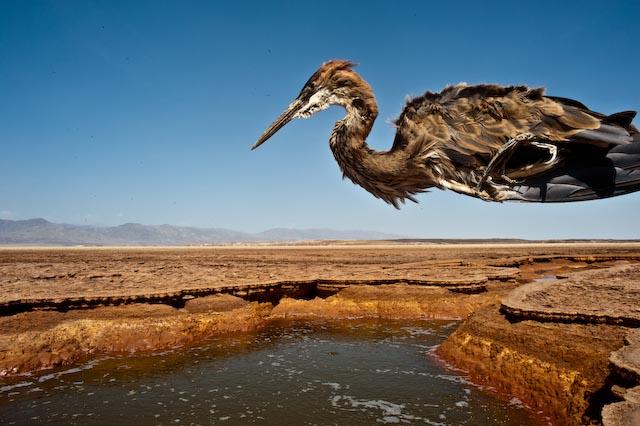 Ethiopian bird