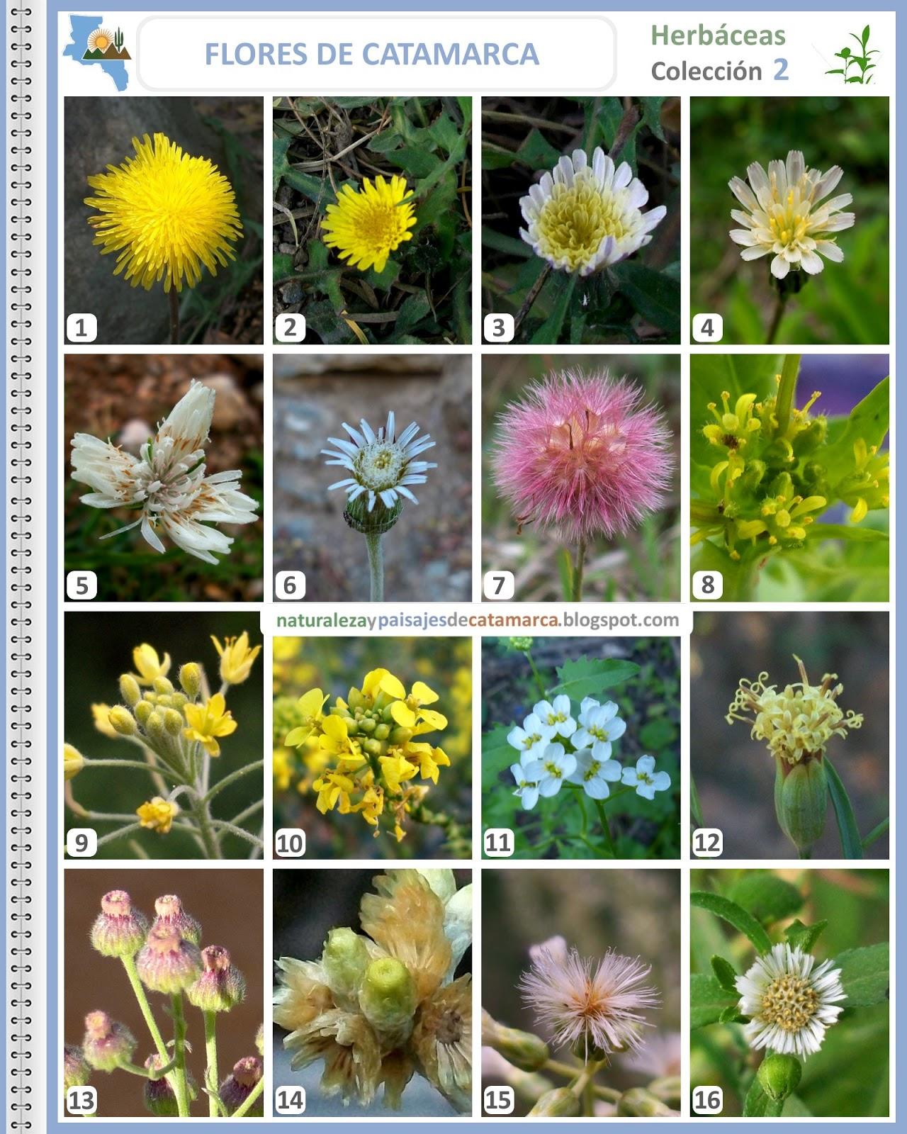 Naturaleza y paisajes de catamarca flores silvestres de Nombres de plantas comunes