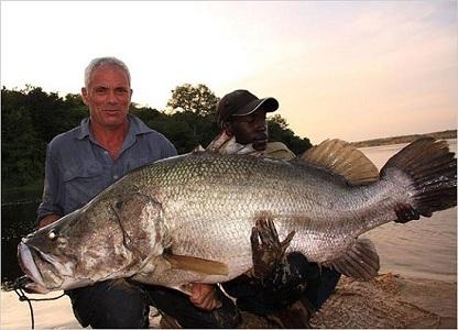 Cá vược sông Nile