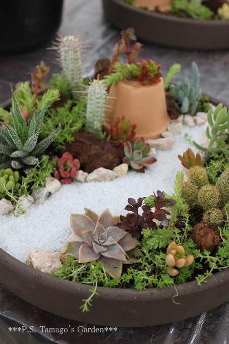 ideias de mini jardim:ABC das Suculentas: Jardim em miniatura
