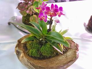 musgo para cultivar orquideas