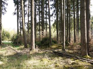 Bild 2: Grabhügel im Forstenrieder Park