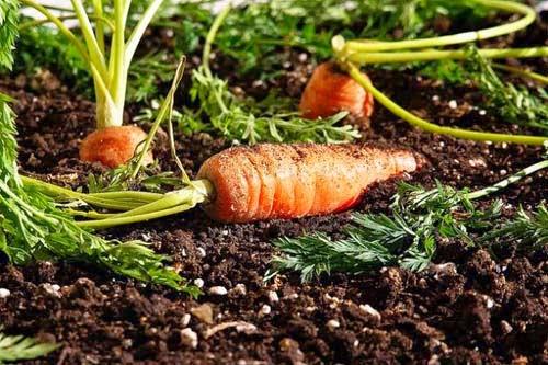 Propriet delle carote un allegro antirughe sulla tavola - Un ampolla sulla tavola ...