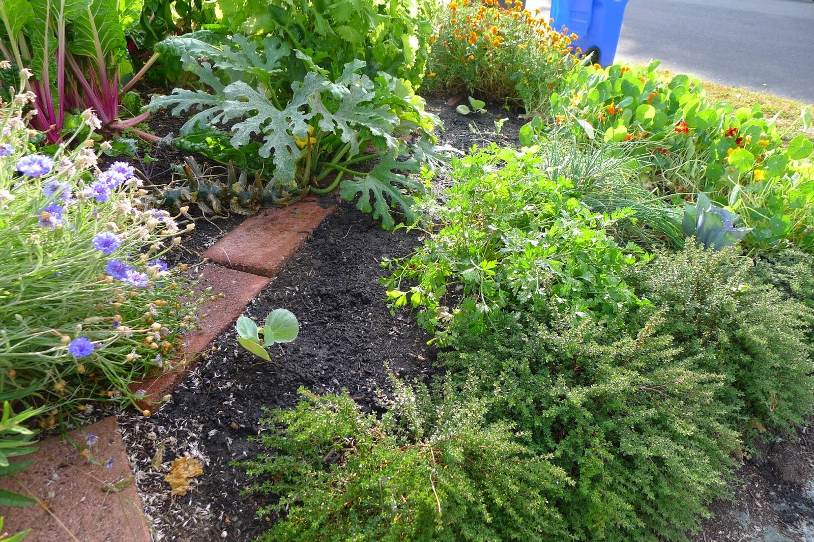 edible landscaing, transitioning in to fall, urban farming, gardening