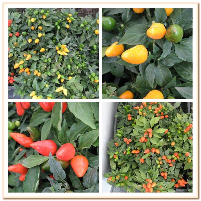 перчики желтые и оранжевые