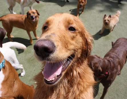 Petropolis | Chesterfield $40 for Doggie Day Camp or $100 toward pet boarding (up to $122 value)