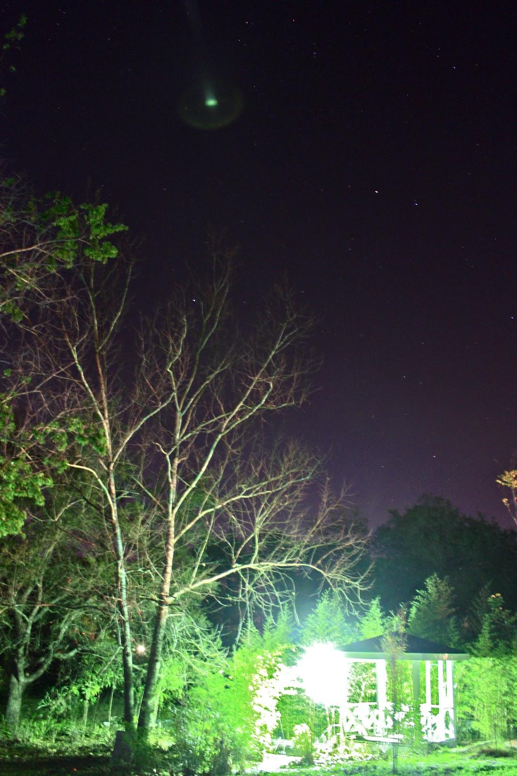 Starry Night | Phillip's Natural World 1.0.2