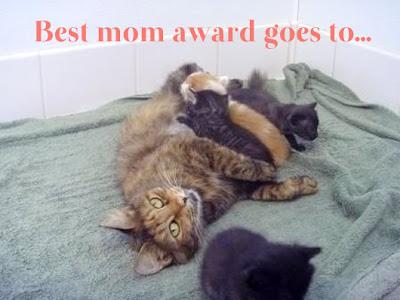 Portia, induk kucing yang melahirkan ketika seekor musang menyerangnya