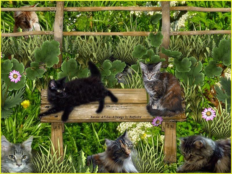 meine geliebte Katzenfamilie