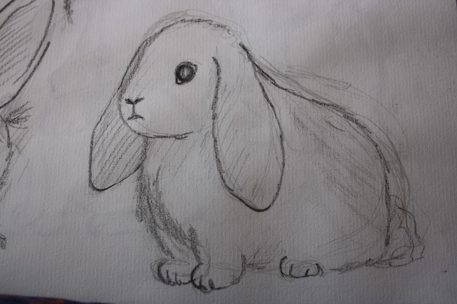 Uncategorized Drawn Pictures Of Animals sarah minshall illustration observational drawing once i have drawn a variety of the more common animals plan to experiment with exotic creatures that children perhaps know very little abou