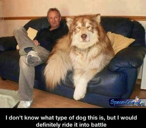 funny big dog picture