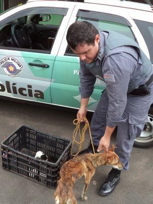 Animais foram levados para o Centro de Controle de Zoonoses (Foto: Divulgação/ Polícia Ambiental)