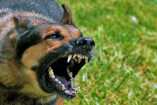Фото имитация такой вот собаки это оборудование