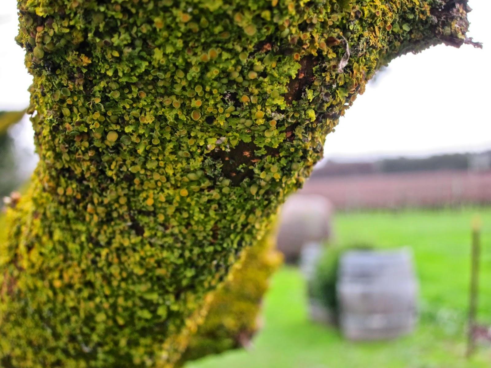 moss tree coombe farm winery