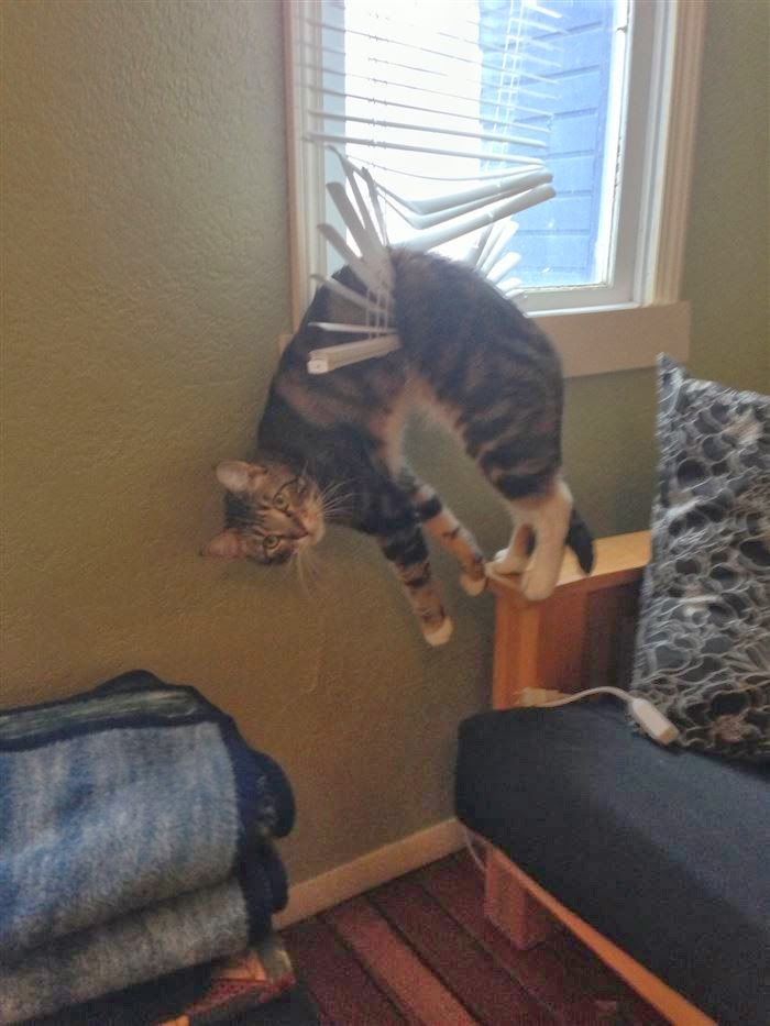 29 Animals Losing The Battle Against Furniture