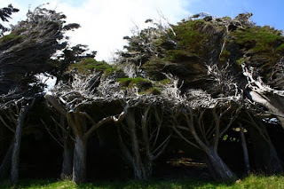 Trees shaped into different Forms