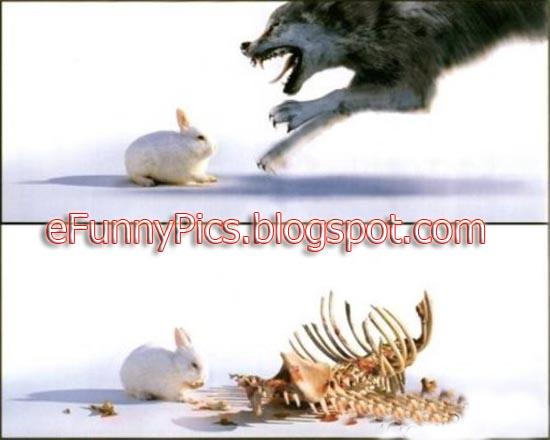 The Killer Rabbit