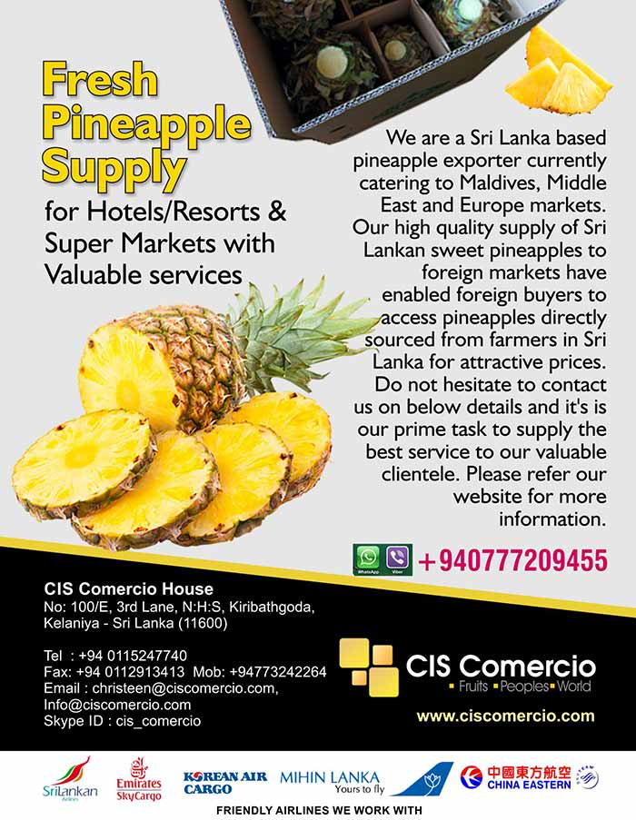 We are a Sri Lanka based pineapple exporter currently catering to Maldives, Middle East and Europe markets. Our high quality supply of Sri Lankan sweet pineapples to foreign markets have enabled foreign buyers to access pineapples directly sourced from farmers in Sri Lanka for attractive prices. Do not hesitate to contact us on below details and it's is our prime task to supply the best service to our valuable clientele. Please refer our website for more information.