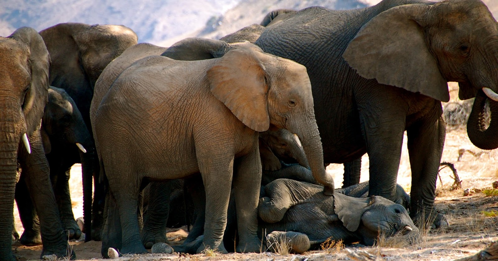 finding hope in a fractured world essays essays the heartache of elephants