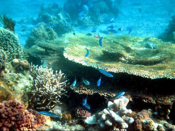 Objek wisata Pulau Moyo 5