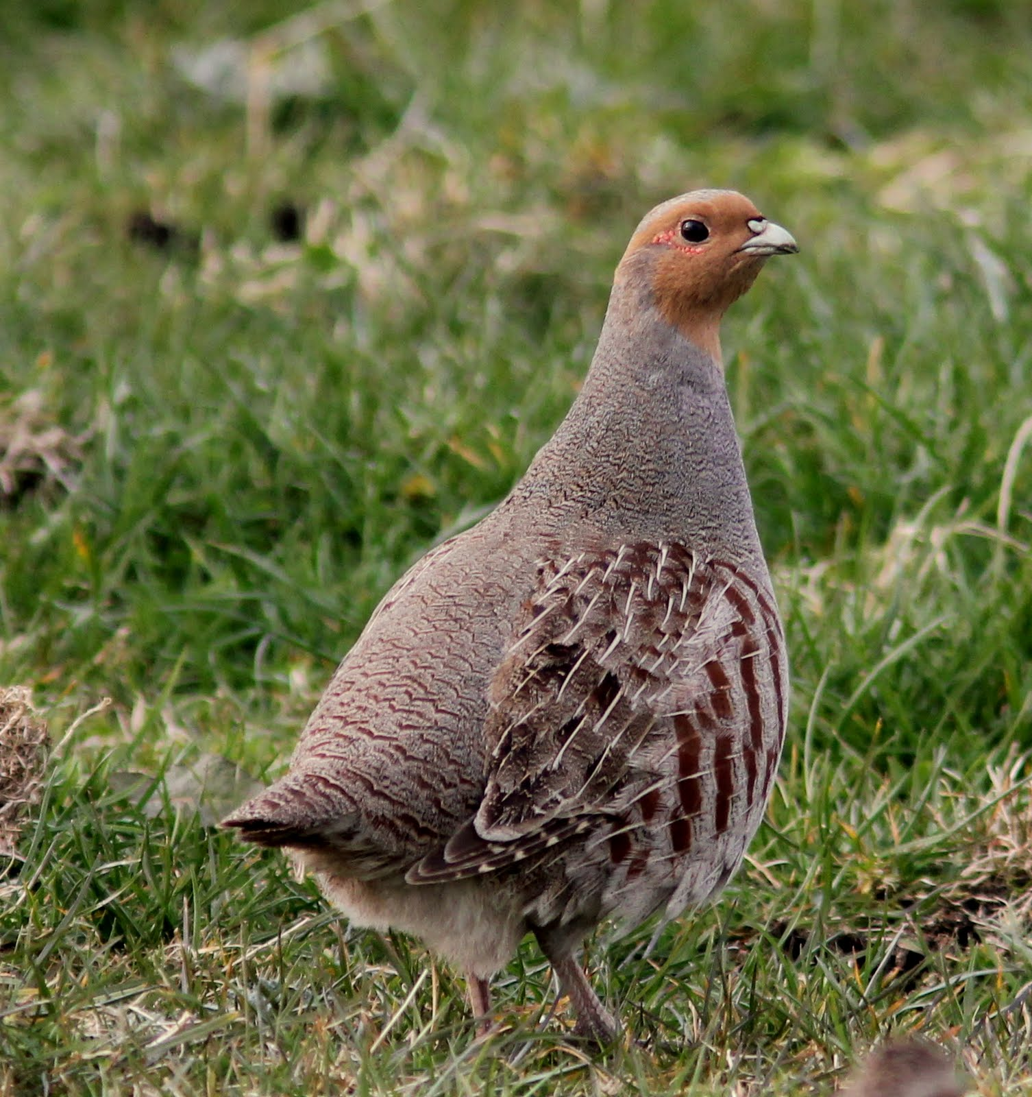 limerick-birder.blog: ...
