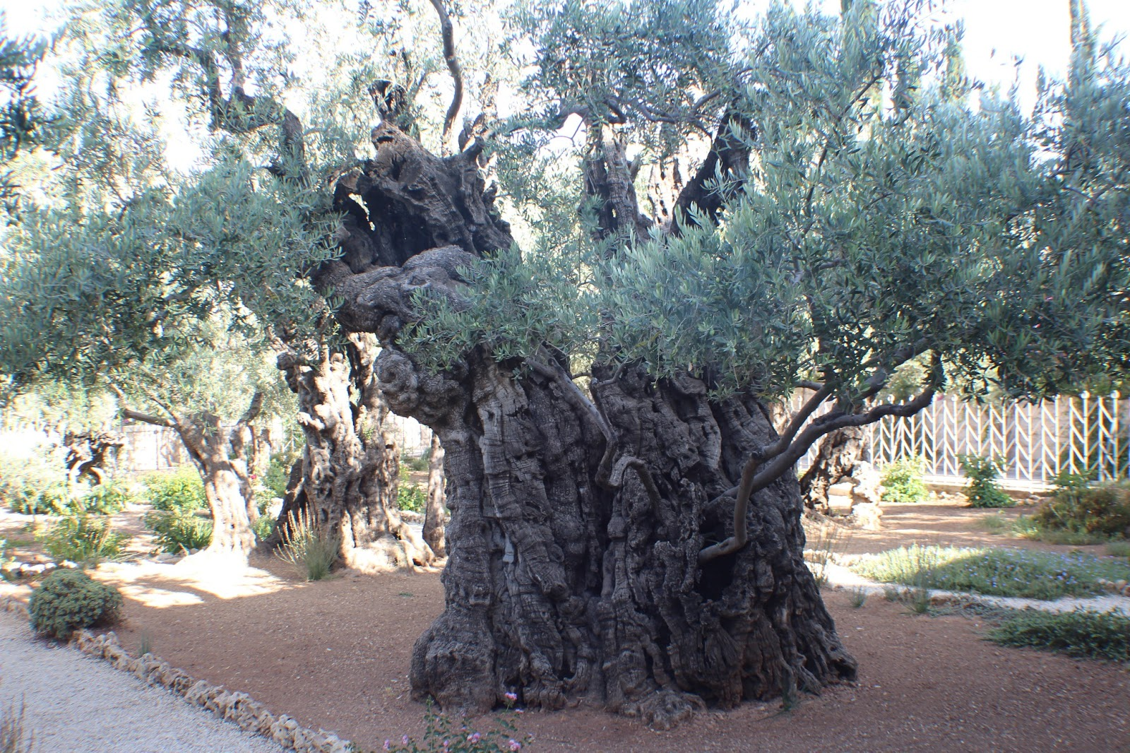 study   mt  olives   shrine   book