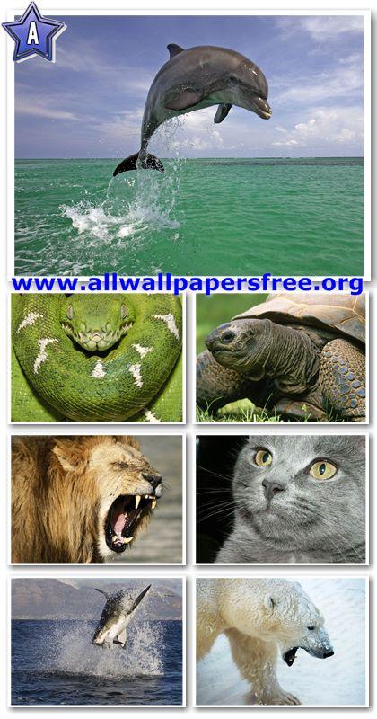 60 Amazing Animals Wallpapers 1280 X 1024 [Set 11]
