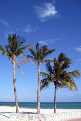 Coconut tree iPhone