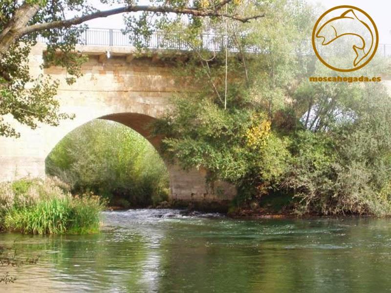 río esla, Mansilla de las Mulas, leon, pesca, pesca a mosca, truchas