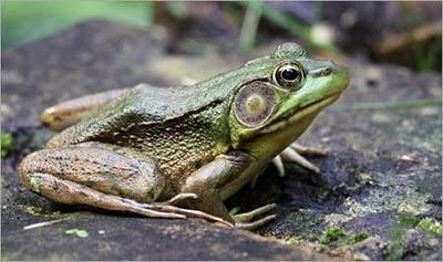 hewan ajaib, binatang unik, foto-foto mahluk luar biasa, gambar keajaiban alam