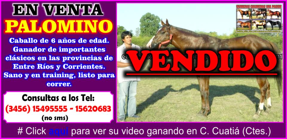 PALOMINO - VENTA - 17.12.2014