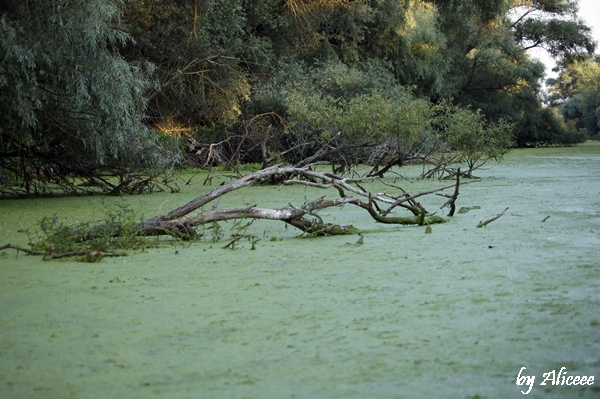 canale-verzi-delta-dunarii-romania