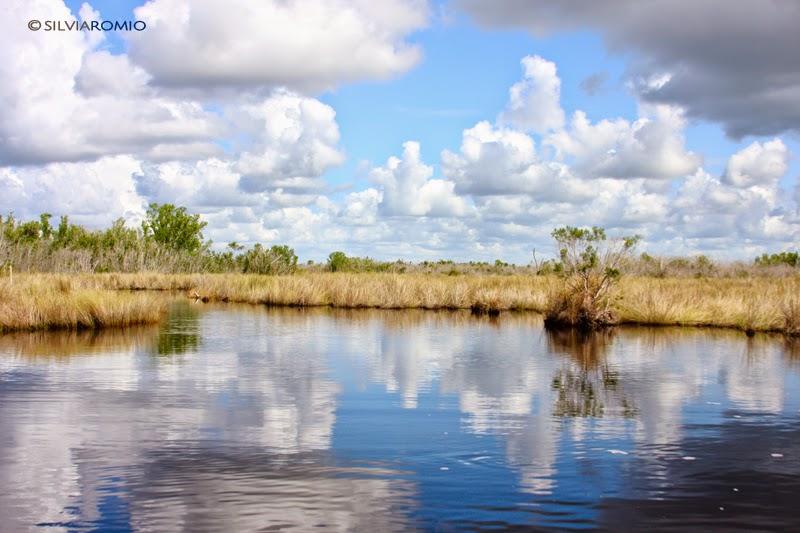 Il parco delle Everglades