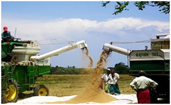 low agricultural productivity The agricultural sector in assam: its importance  this article examines the role of the agricultural sector in assam's economy and its major problems  numerous studies have shown that small and fragmented land holdings are one of the principal causes of low productivity because such land holdings do not facilitate economic.