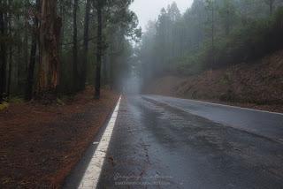 Туман в эвкалиптовом лесу Эсперанса