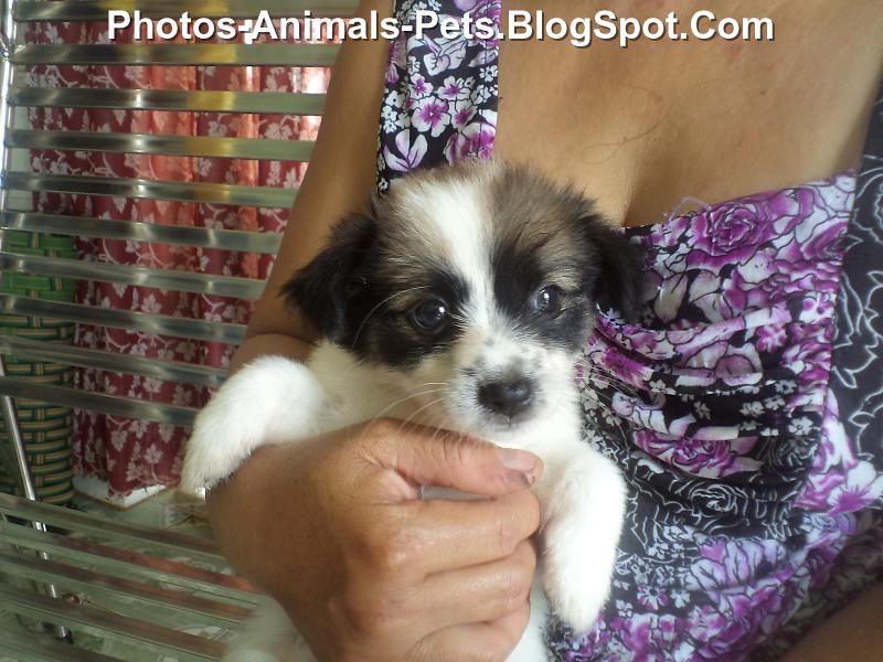 http://4.bp.blogspot.com/-7tGaKtLgpCY/TeXiJj-WoGI/AAAAAAAABN8/_4FtxHxr7Vw/s1600/Puppies%2Bcute_0002.jpg