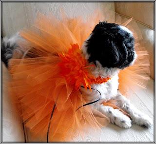 Pumpkin Orange Powder Puff Dog Tutu