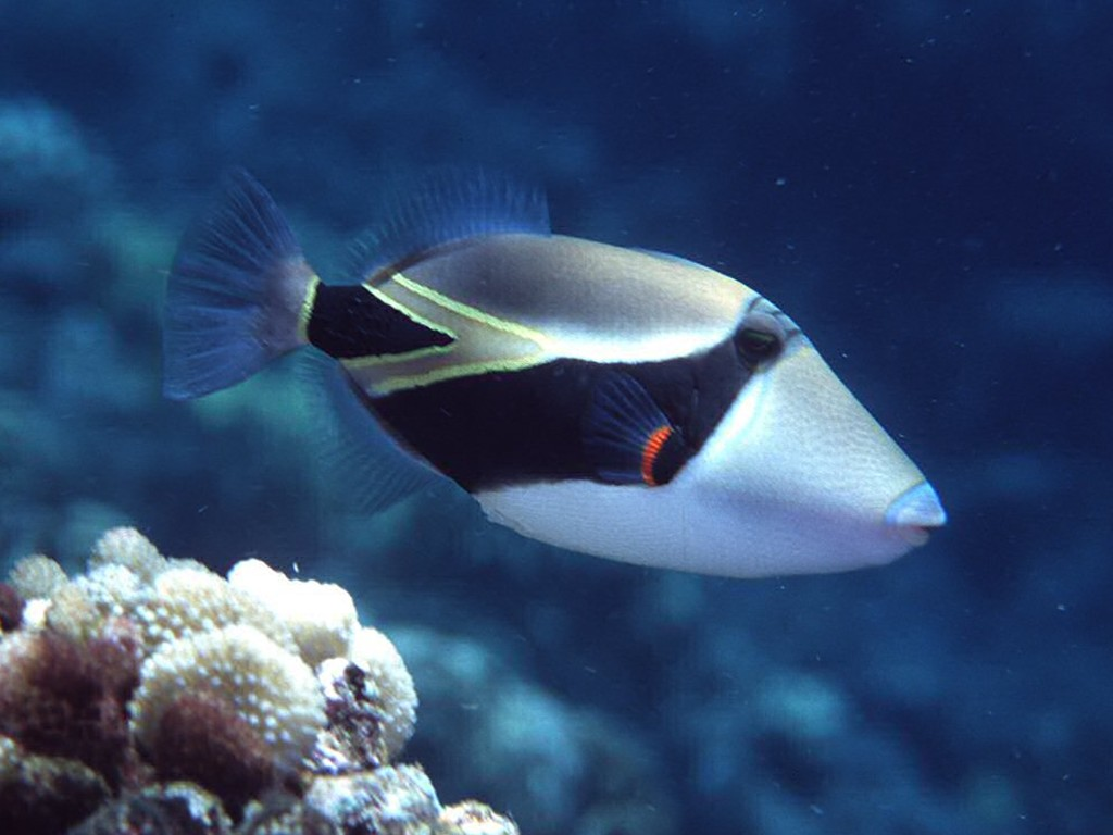 tropic fish - photo #30