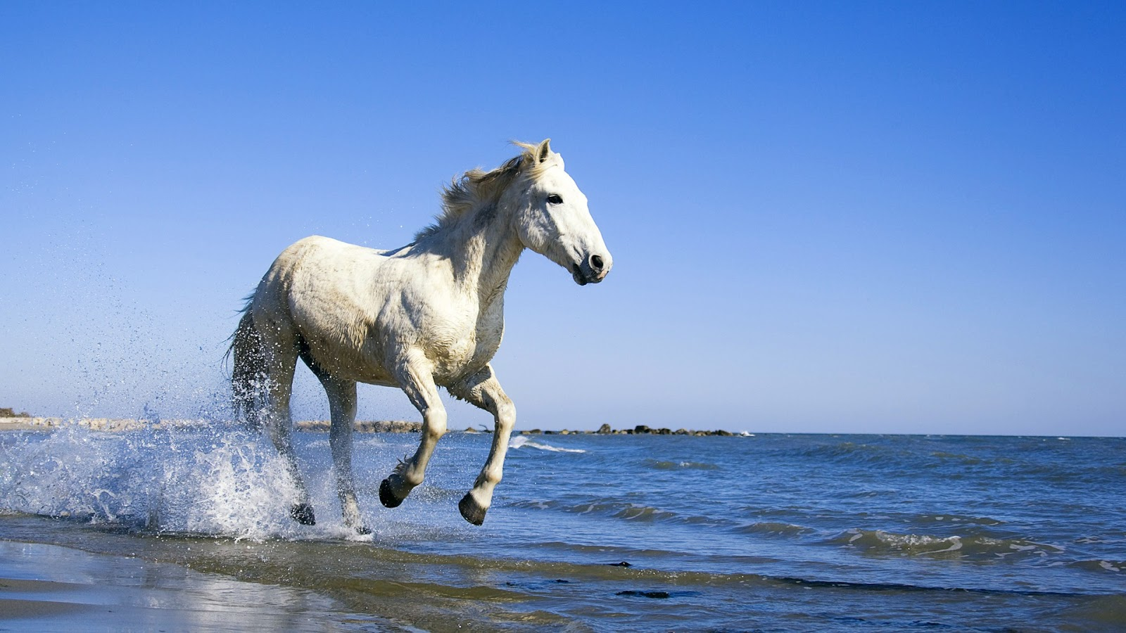 white horse beach jewish single women Download sexy woman horse images and photos over 1,152 sexy woman horse pictures to choose from, with no signup needed download in under 30 seconds.