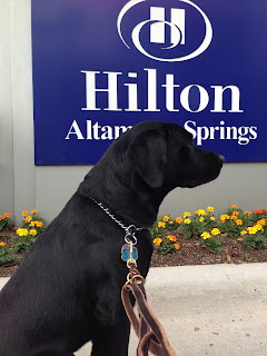 Coach in front of the Hilton Altamonte Springs sign.