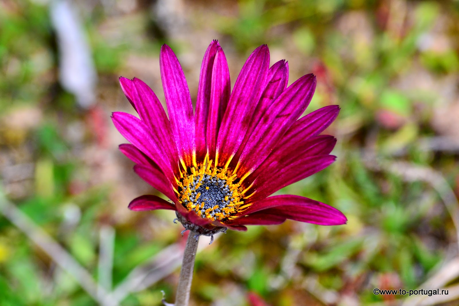 цветы в Португалии