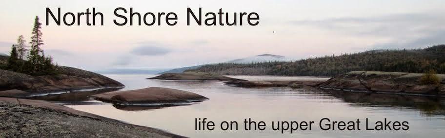 North Shore Nature