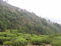 Tea's Moutain with Trees