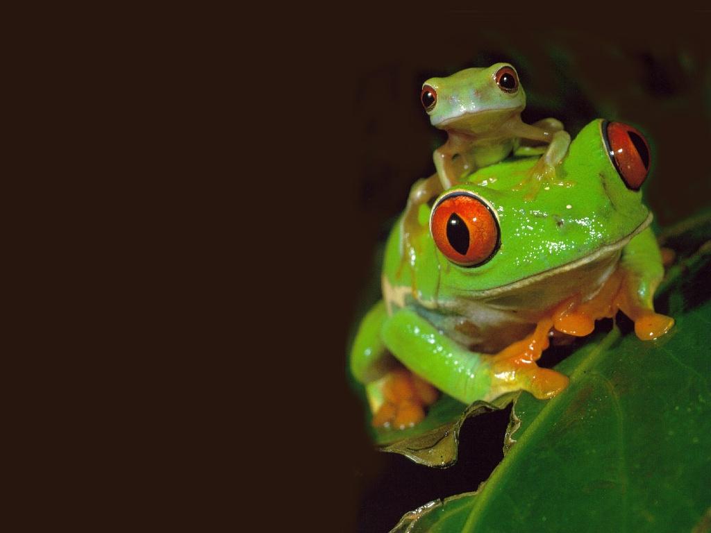 Angelina Jolie Hd Wallpapers Frog Hd Wallpapers